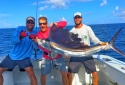 Nice Sailfish