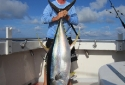 Destin Deep Sea Fishing Charter - 150 lb Yellow Fin Tuna