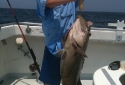 Caught in Destin While Deep Sea Fishing