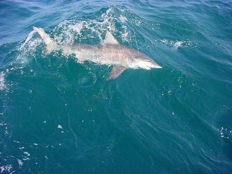 Destin charter fishing reviews fifth amendment charters for Deep sea fishing destin