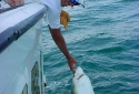 Destin Deep Sea Shark Fishing