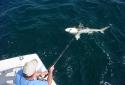 Destin Shark Deep Sea Fishing