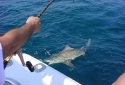 Deep Sea Destin Shark Fishing