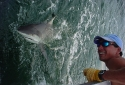 Destin Shark Fishing Charters