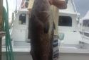 destin deep sea fishing charters destin shark fishing 15