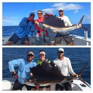 2 sailfish